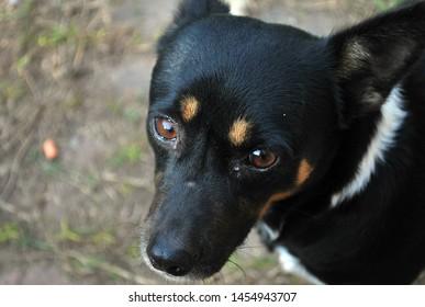 little dog mascot animal perro