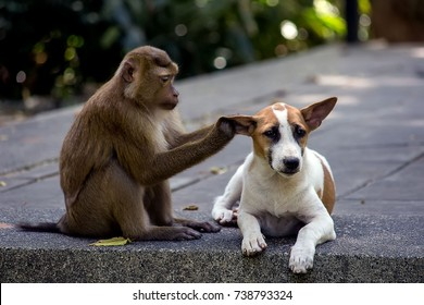 a little dog with a monkey