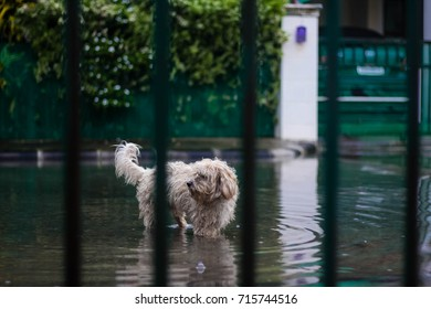 The little dog on the day of the flood home.