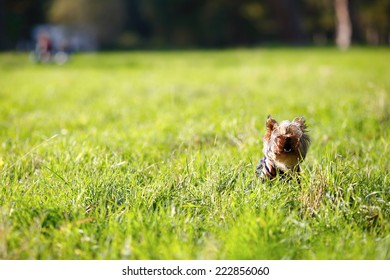Little dog on a glade, nature