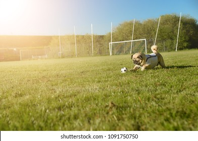 Little dog is running with a football over the football field. He rolls the ball. In the background you can see the goal. The dog is wearing a T-shirt. It's a sunny day with lens flares. Copy space