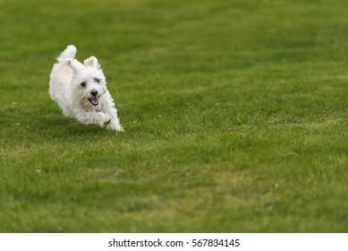 Little dog running in garden