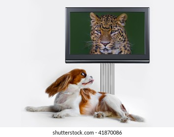 little dog sitting in front of the TV with giant leopard head on the screen