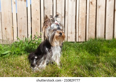 Little dog sitting in garden
