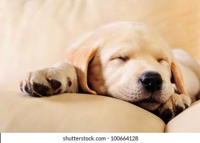 Little dog sleeping on sofa