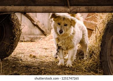 Little dog under waggon