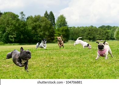Little dogs in the park