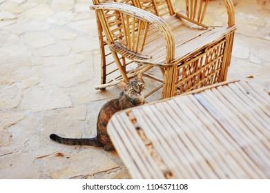 Little domestic cat. Cute cat eating food.