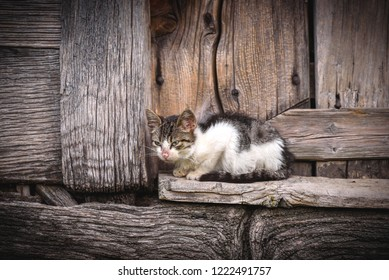 Little domestic cat on the wooden background,selective focus