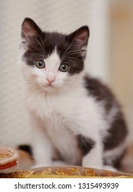 Little domestic kitten of a color, white with black spots, sits