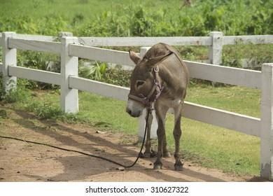 Little donkey in the farm