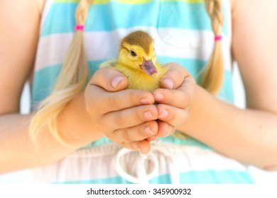 little duckling in the children's hands on a bright background