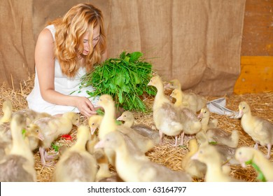 Little Ducklings