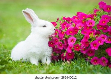 Little dwarf rabbit sitting near flowers