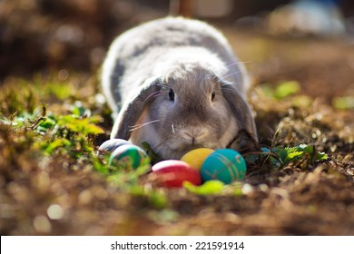 A little Easter rabbit sitting among colored eggs