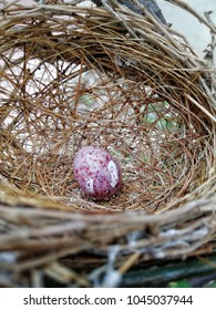 A little egg of bird is in the bird-nest on the tree. The beginning of a little life of bird from mother.