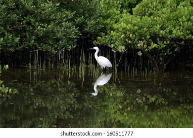 Little Egret with reflection in water