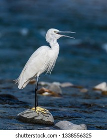 little egret roosting on stone