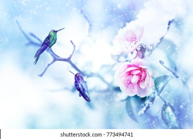 Little fantastic blue birds colibri in the snow and frost on the background of beautiful pink roses. Artistic Christmas and Valentines day winter image. Selective focus.