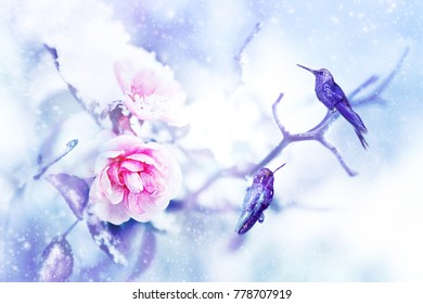 Little fantastic blue birds colibri in the snow and frost on the background of beautiful pink roses. Artistic Christmas winter image. Selective focus. Snowing.