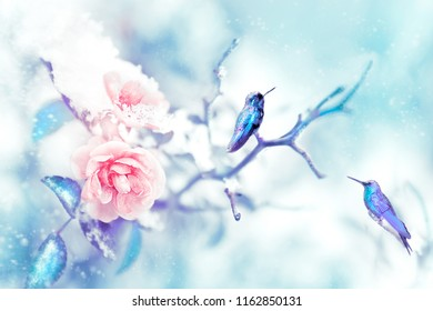 Little fantastic blue and purple birds in the snow and frost on the background of beautiful delicate pink roses. Artistic Christmas winter image.