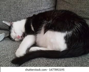Little Flexi cat's photo stories