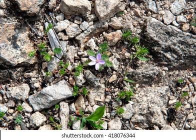 Little flower on the rocks