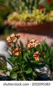 little flowers at grandma garden's in the sunnyday