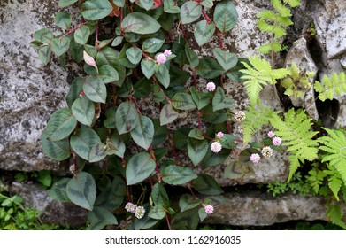 Little flowers and leaves on grey rock wall.