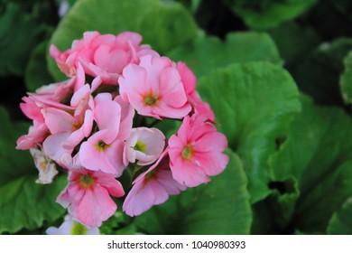 Little flowers in my garden