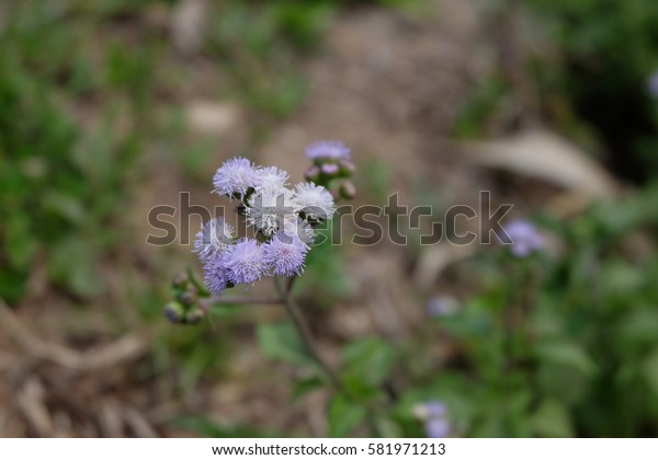 little flowers in the small hill