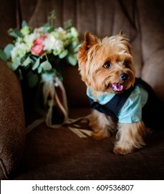 Little fluffy dog sits on amchair with wedding bouquet