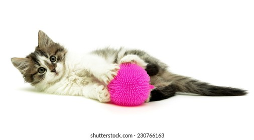 Little fluffy kitten with toy lying on a white background. horizontal photo.
