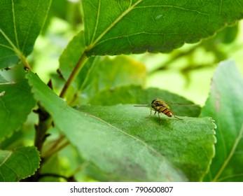 Little Fly In Green World