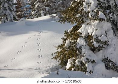 little footprint on the snow