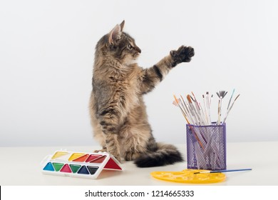 Little four month mixed breed kitten on white background with colorful paints and brushes