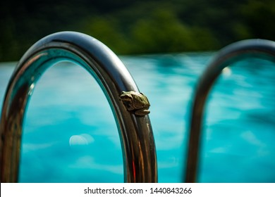 Little frog on outdoor pool as a relax concept