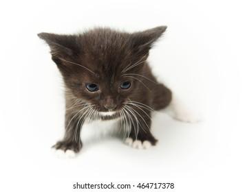 Little funny black kitty on white background