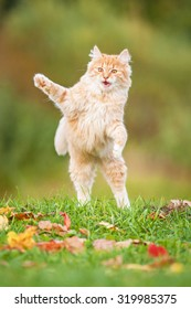 Little funny cat playing outdoors in autumn