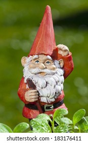 Little funny garden gnome in the garden behind small seedlings of herbs