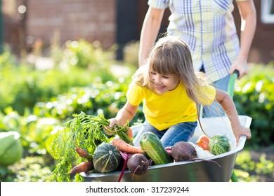 little funny girl inside wheelbarrow with vegetables in garden