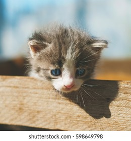 A little funny gray striped kitten with a blue eyes in a wooden rustic box at outdoors at a sunny spring day