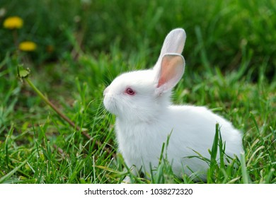 Little funny rabbit on the field in summer
