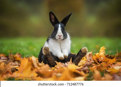 Little funny rabbit sitting in leaves in autumn