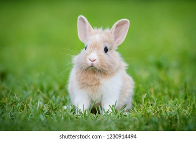 Little funny rabbit sitting on the lawn