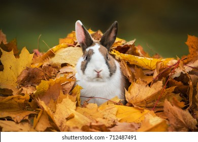 Little funny rabbit sitting in a pile of leaves in autumn