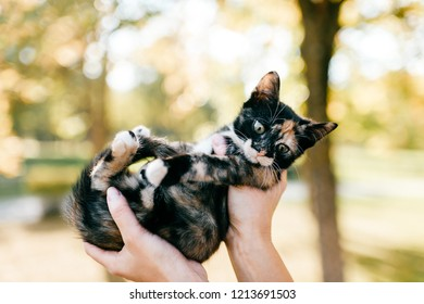 Little furry purebred pussycat portrait. Owner holding small kitten on autumn abstract background. Lovely cat with funny muzzle in woman hands look around. Girl with her beloved pet playing outdoor