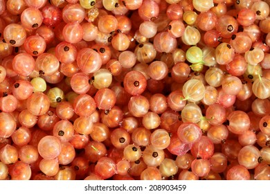 Little garden jems, a close up of a bowl of Rose currants, a less well known variety of currant