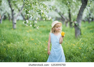 Little girl 5 years old sniffing a dandelion. girl sniffing flowers. Happy childhood. Allergy season, insects. Girl collects dandelions bouquet for a wreath in meadow of orchard.