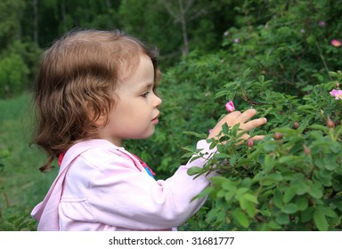 A little girl admires the flower of wild rose.
